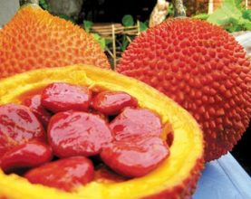 Vietnam Gac fruit